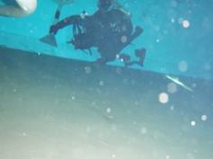 潜水士による調査清掃の様子